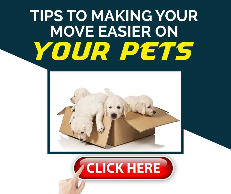 Tips to Making Your Move Easier on Your Pets